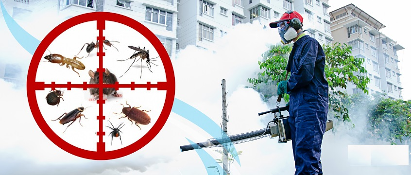 PEST CONTROL SERVICES - pest control, termite proofing, bed bugs ...