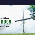 Pest Control and Termite Treatment in winter by Secure Fumigation Services