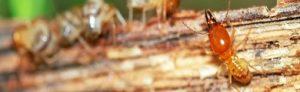 termite-fumigation-karachi
