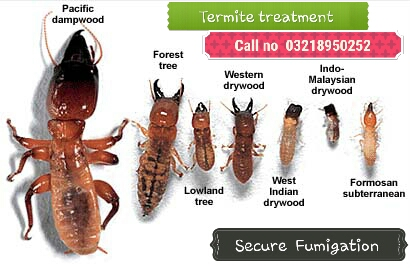 termite proofing services