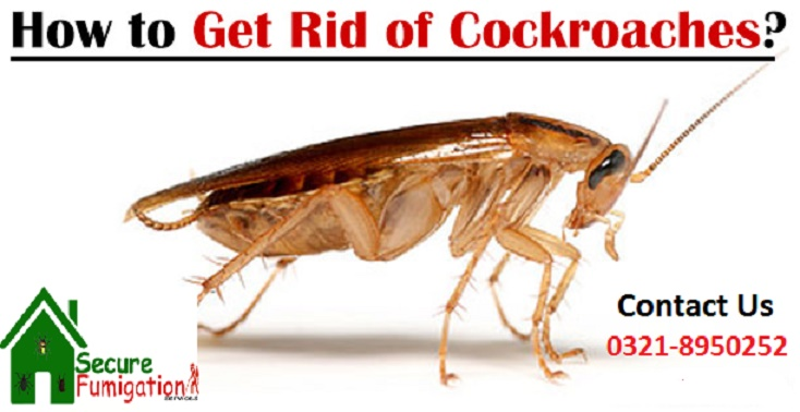 cockroaches treatment in karachi